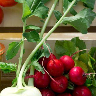 Obst & Gemüse